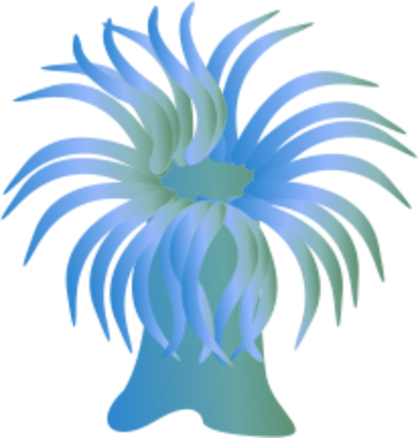 Sea Anemone clipart #2, Download drawings