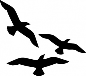 Sea Bird clipart #6, Download drawings