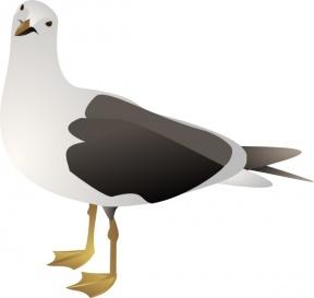 Sea Bird clipart #1, Download drawings