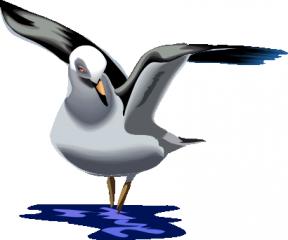 Sea Bird clipart #12, Download drawings