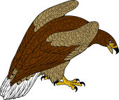 Sea Eagle clipart #2, Download drawings
