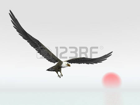 Sea Eagle clipart #9, Download drawings