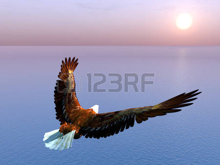 Sea Eagle clipart #10, Download drawings
