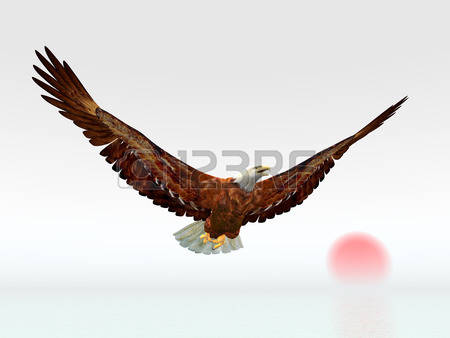 Sea Eagle clipart #14, Download drawings