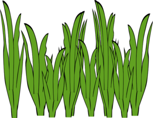 Seaweed clipart #15, Download drawings