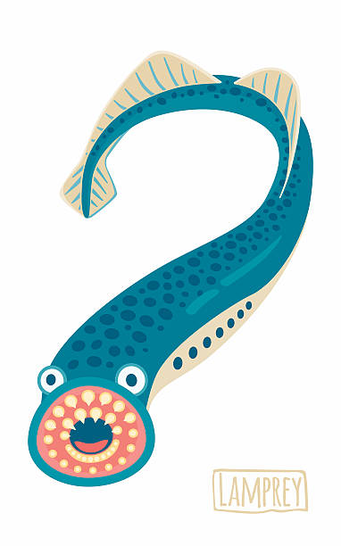 Sea Lamprey clipart #14, Download drawings
