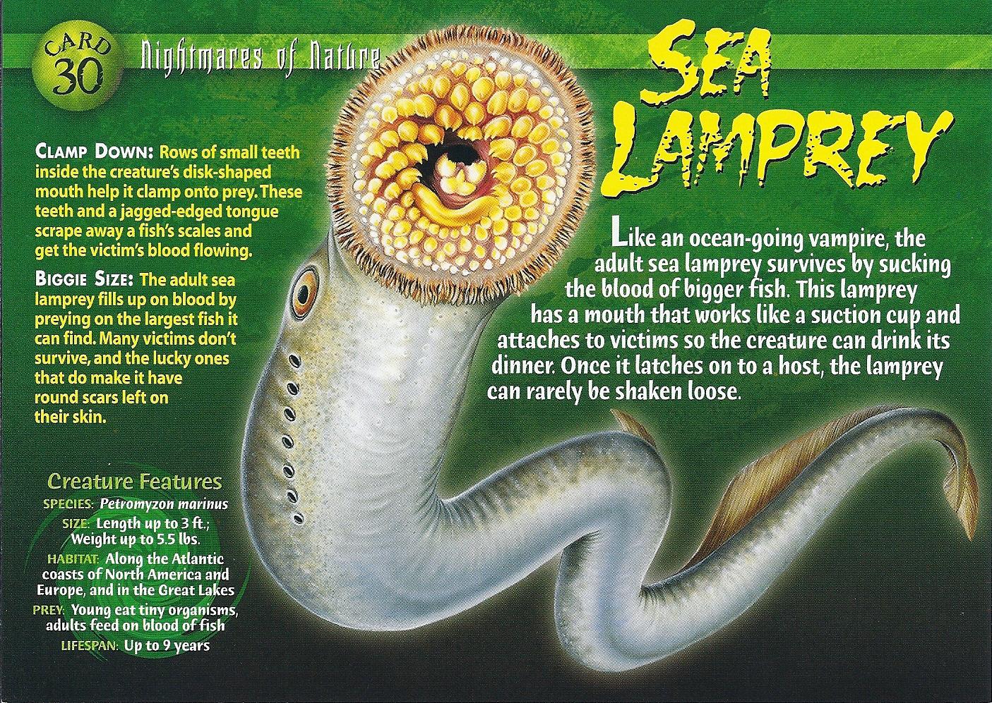 Sea Lamprey coloring #13, Download drawings