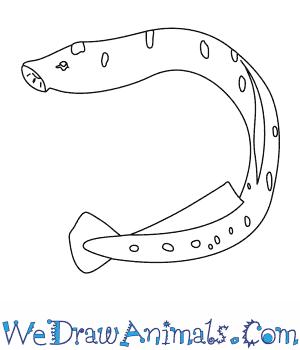Sea Lamprey coloring #1, Download drawings