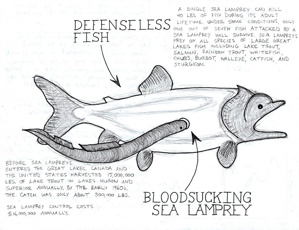 Sea Lamprey coloring #7, Download drawings