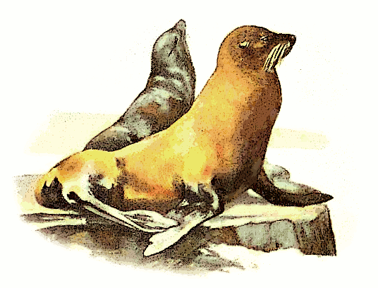 Sea Lion clipart #11, Download drawings