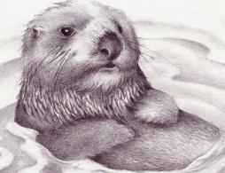 Sea Otter clipart #9, Download drawings