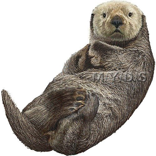 Sea Otter clipart #3, Download drawings