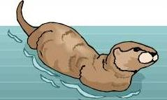 Sea Otter clipart #5, Download drawings