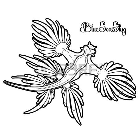 Sea Slug clipart #10, Download drawings