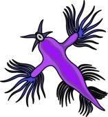 Sea Slug clipart #13, Download drawings