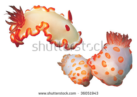 Sea Slug clipart #9, Download drawings
