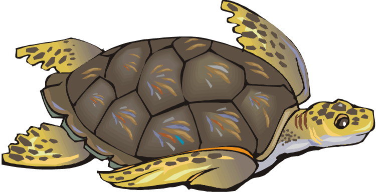 Turtle clipart #1, Download drawings