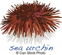 Sea Urchin clipart #11, Download drawings