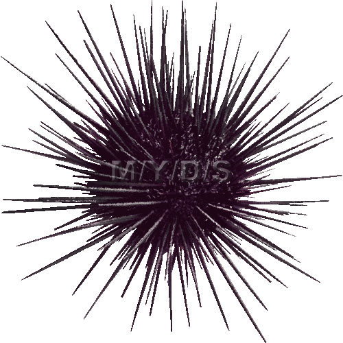Sea Urchin clipart #3, Download drawings