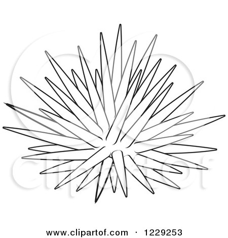 Sea Urchin clipart #5, Download drawings