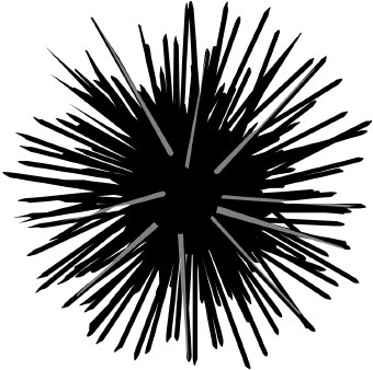 Sea Urchin clipart #20, Download drawings