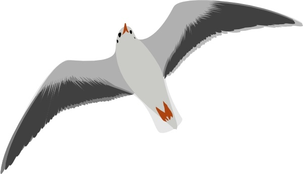 Seagull clipart #16, Download drawings