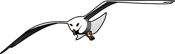 Seagull clipart #14, Download drawings