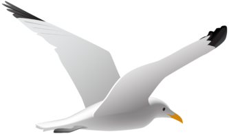 Seagull clipart #11, Download drawings