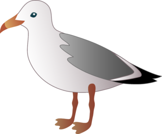 Seagull clipart #6, Download drawings