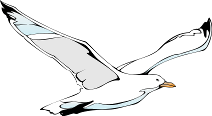 Seagull clipart #20, Download drawings