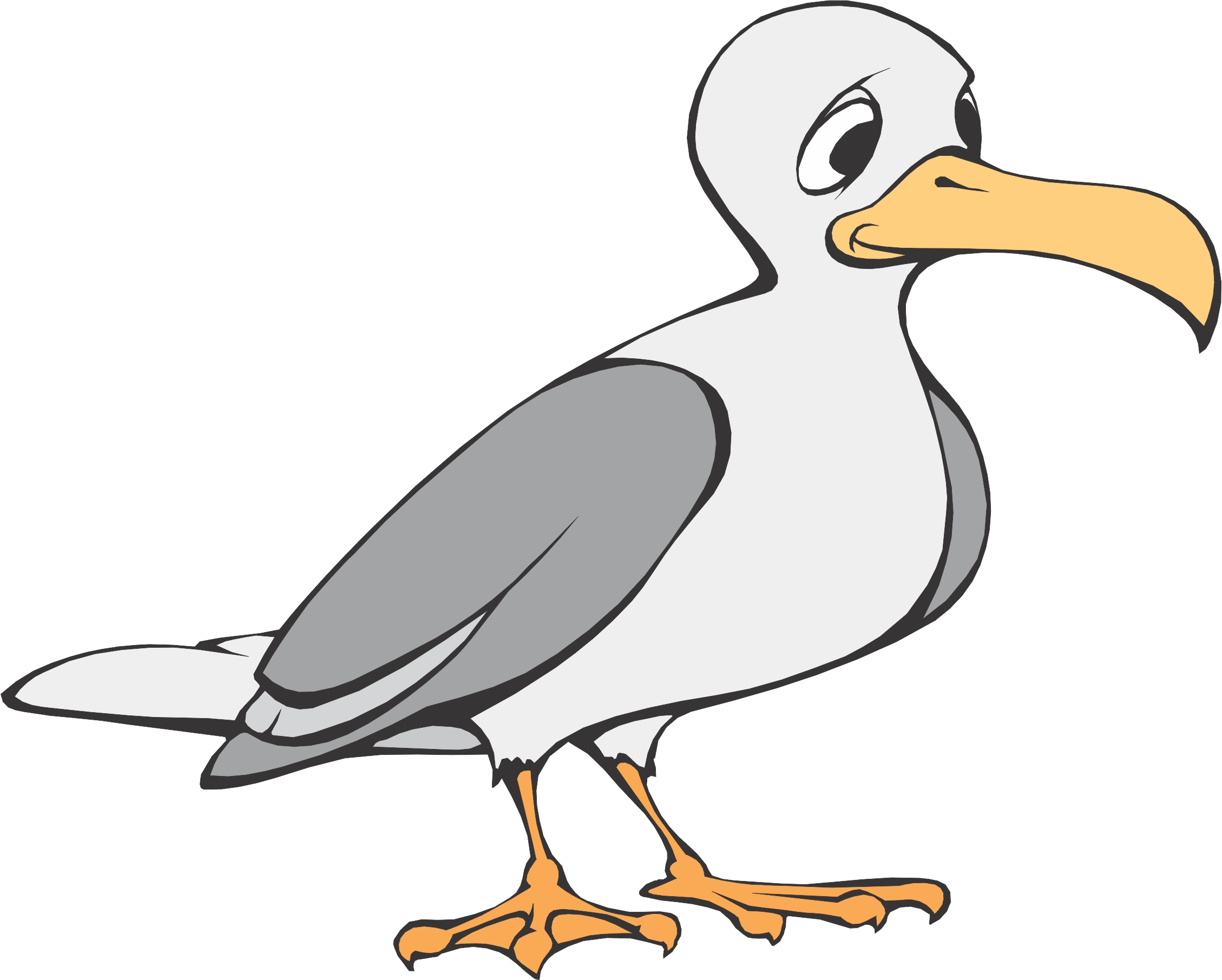 Seagull clipart #8, Download drawings