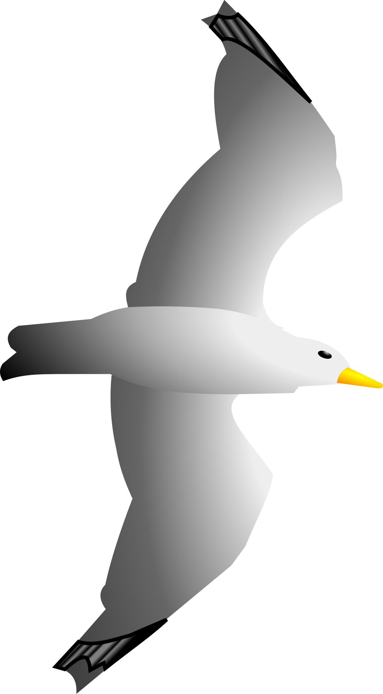 Seagull clipart #1, Download drawings
