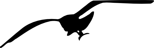 Seagull clipart #5, Download drawings