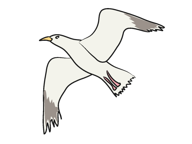Seagull clipart #18, Download drawings