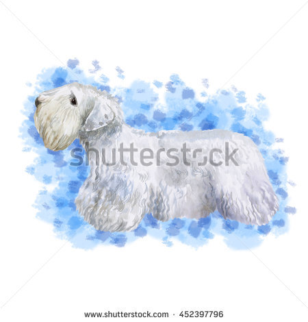 Sealyham Terrier clipart #10, Download drawings
