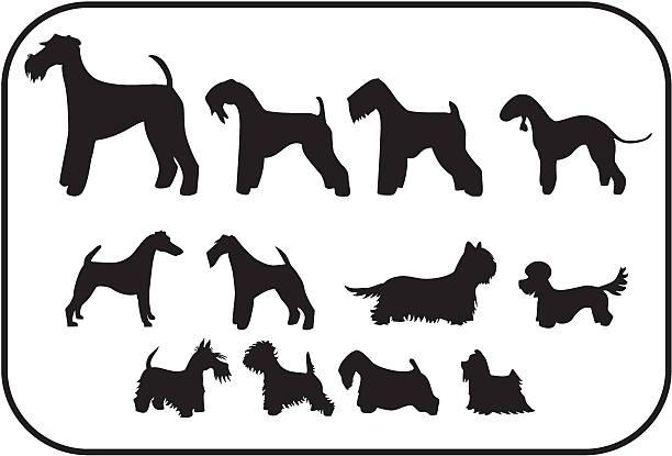 Sealyham Terrier clipart #1, Download drawings