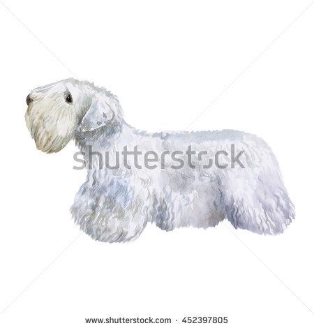 Sealyham Terrier clipart #2, Download drawings