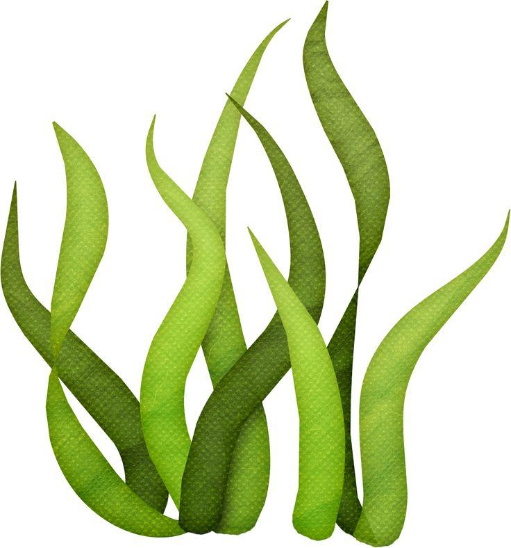 Seaweed clipart #3, Download drawings