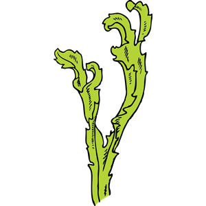 Seaweed clipart #9, Download drawings