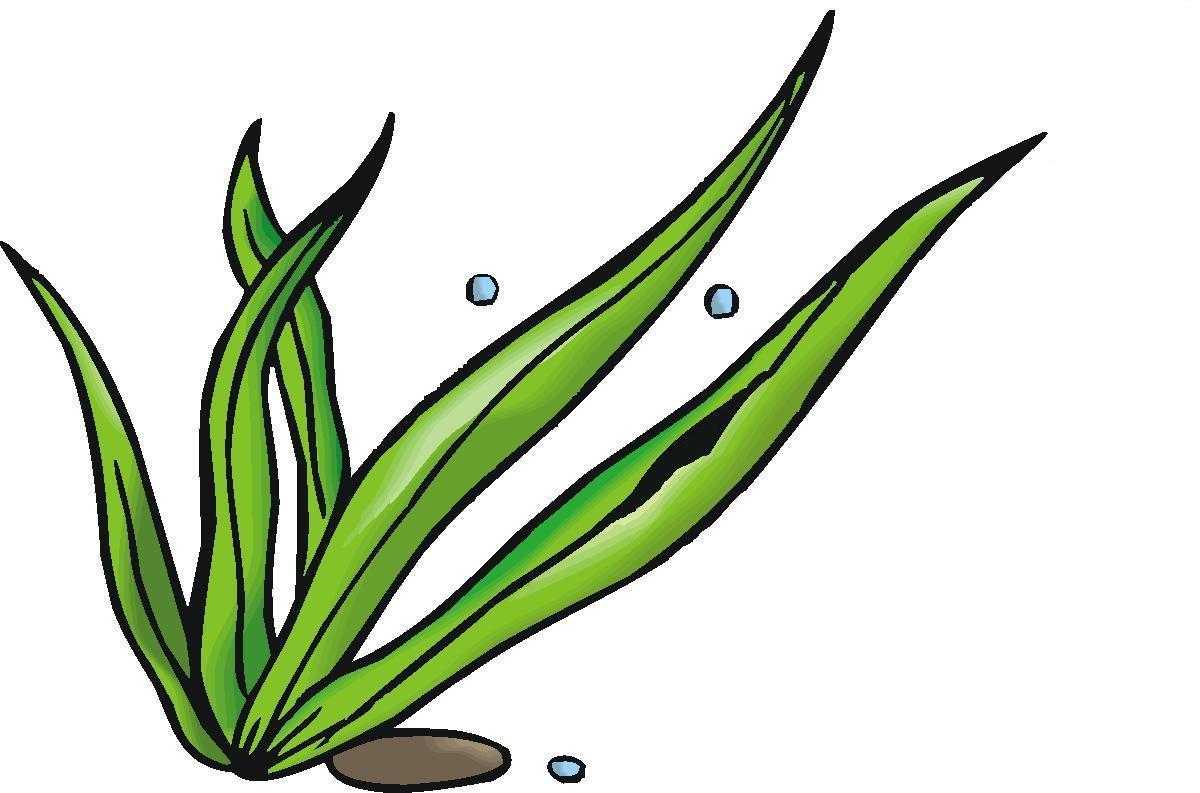 Seaweed clipart #12, Download drawings
