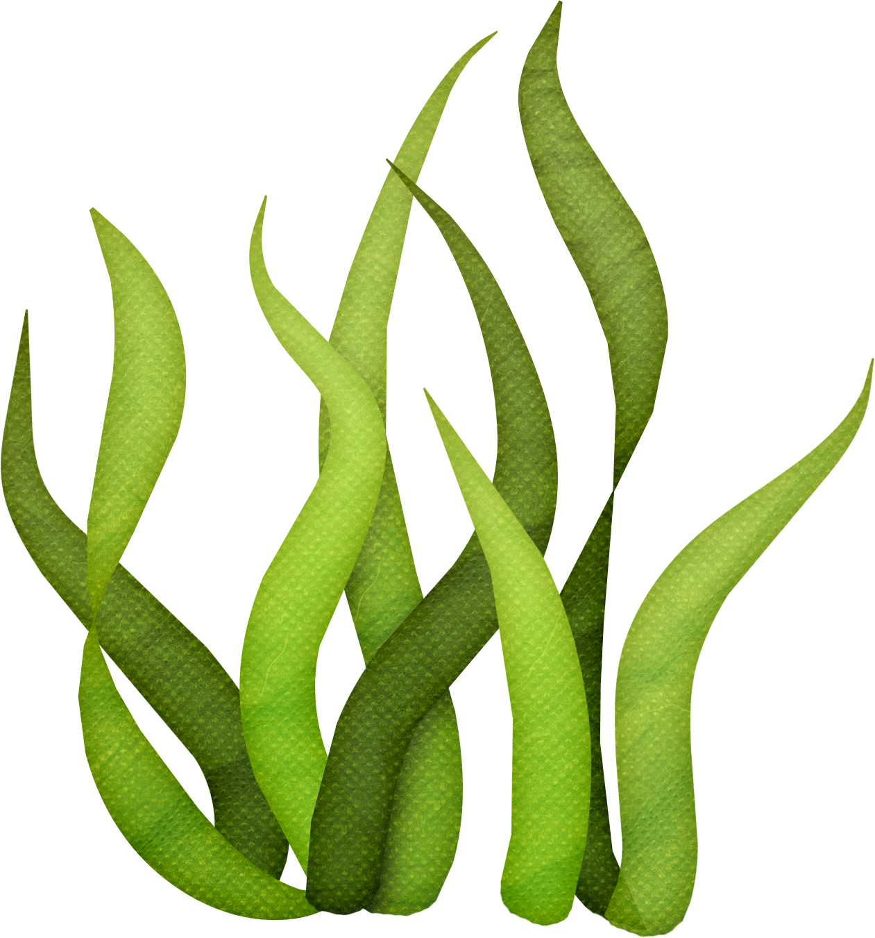 Seaweed svg #10, Download drawings