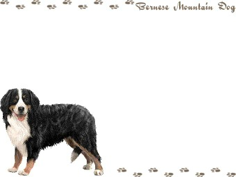 Sennenhund clipart #3, Download drawings