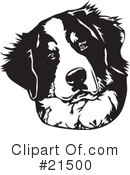 Sennenhund clipart #11, Download drawings