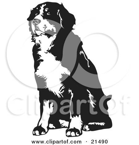 Sennenhund clipart #12, Download drawings