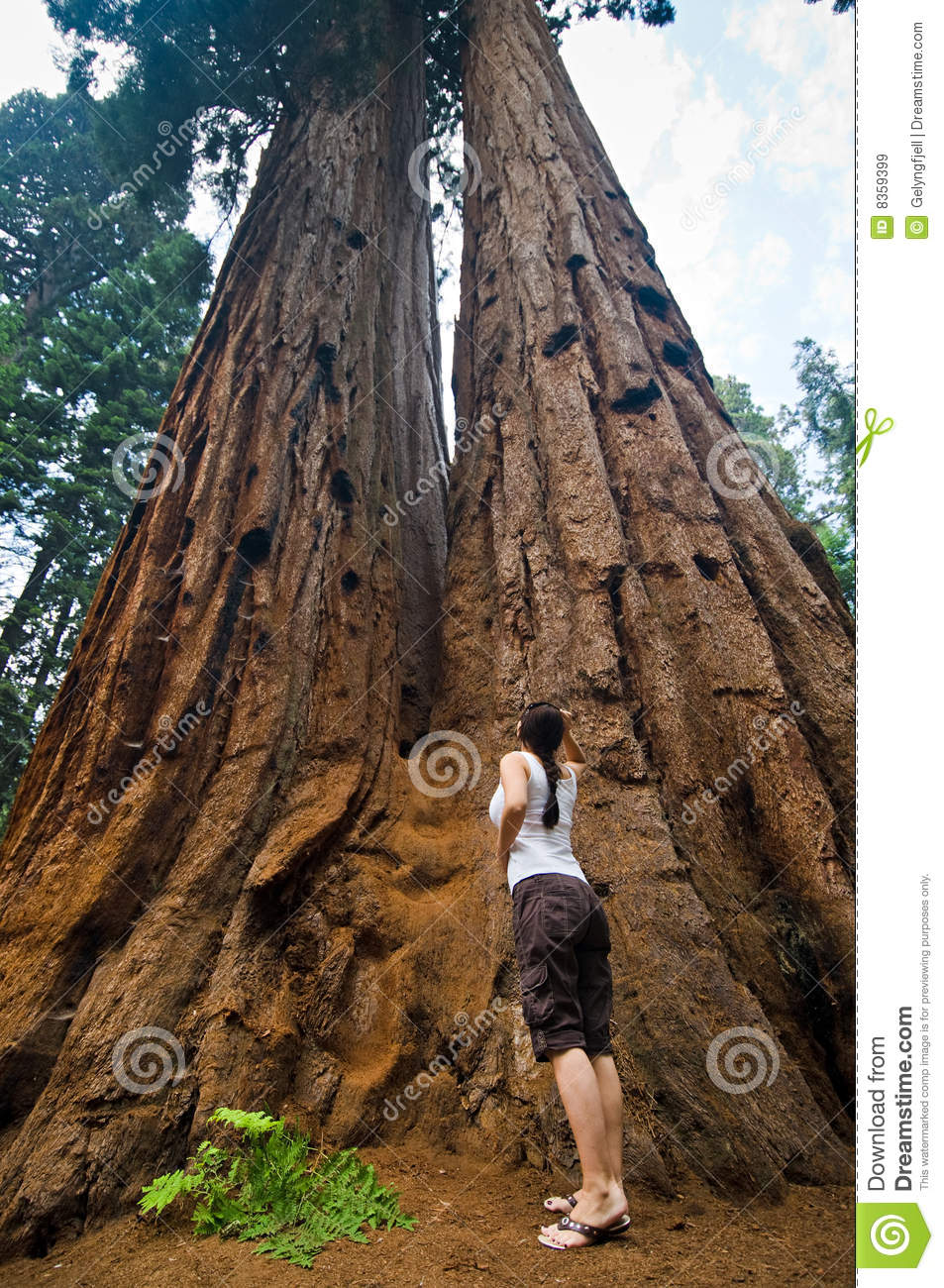 Sequoia National Park clipart #12, Download drawings
