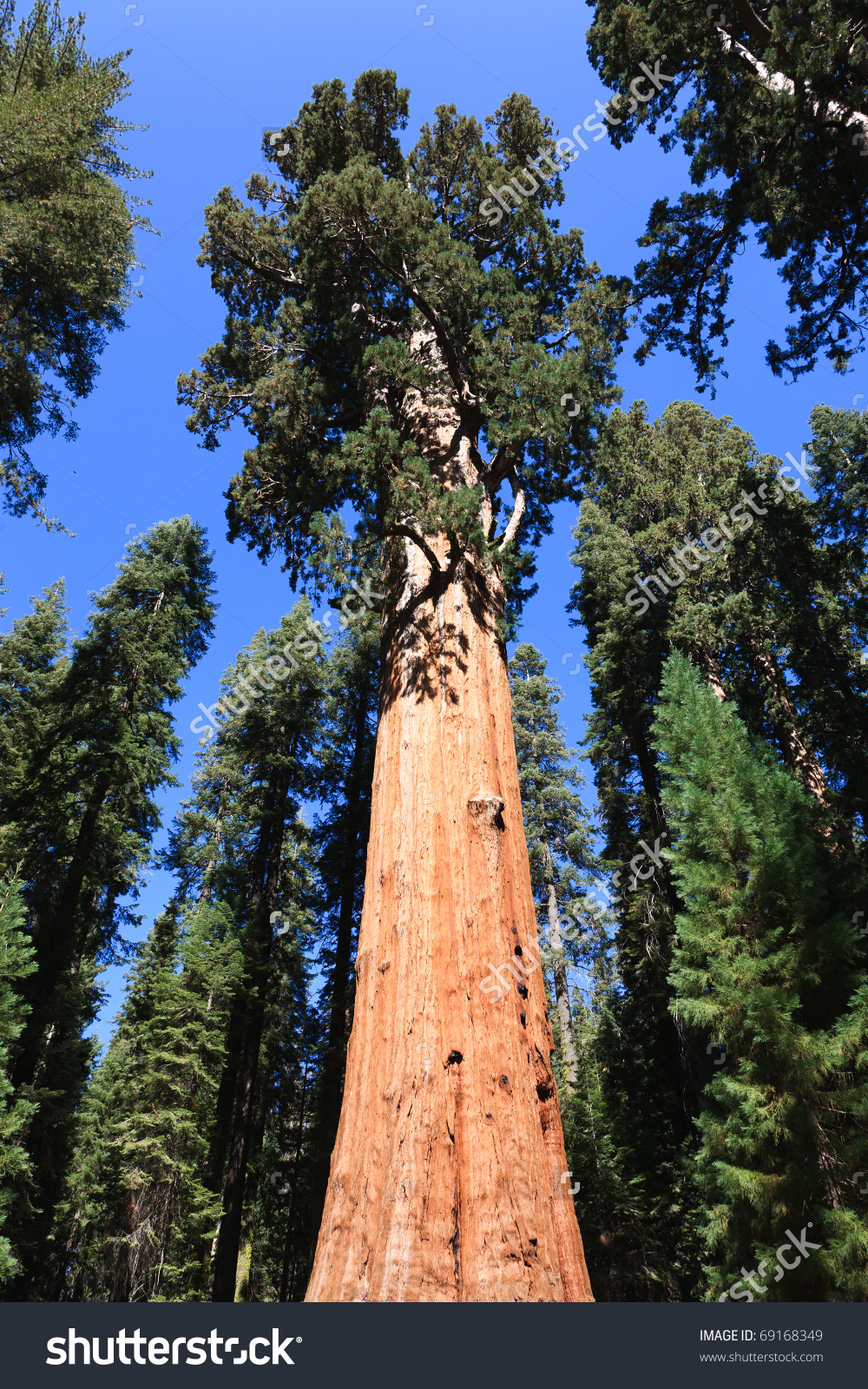 Sequoia National Park clipart #6, Download drawings