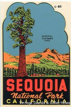 Sequoia National Park clipart #20, Download drawings