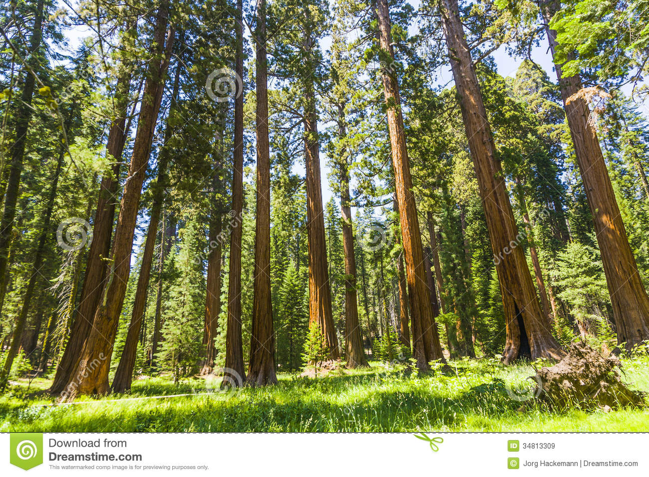 Sequoia National Park clipart #16, Download drawings