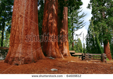 Sequoia National Park clipart #15, Download drawings