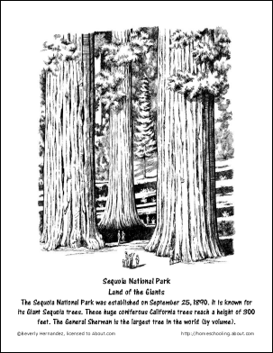 california redwood coloring pages - photo#17